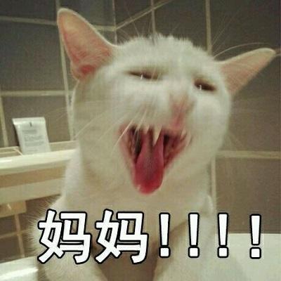 猫喊妈的表情包