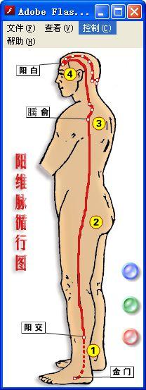 人体经脉穴位图 FLASH版