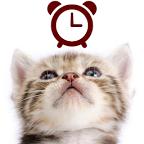 猫咪桌面指针时钟:Cat Clocks1.0.4