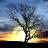 夕阳如画动态壁纸:Silhouette Donation 2.01