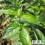 山茱萸种植专业合作社制度