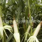 北京市农作物种子代销合同范文