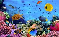 海底世界(Aquariu...