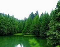 国家森林公园工作总结