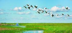 扎龙自然保护区导游词