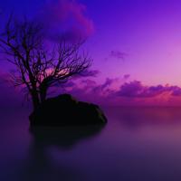 仿M18紫色版整站...
