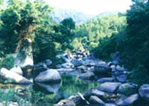 海南吊罗山森林公园导游词