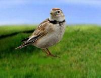 百灵鸟设备管理...