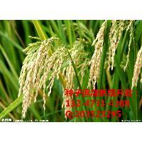 吉林省农业作物种子买卖合同