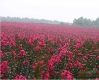 花卉苗圃类网页模板