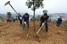 小学生义务植树活动总结