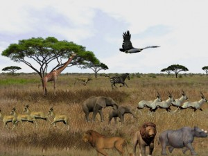 3D Serengeti Safari