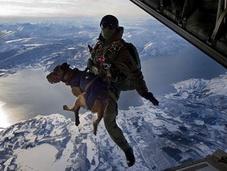 跳伞保护者