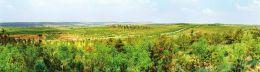 今年绿化造林工作总结