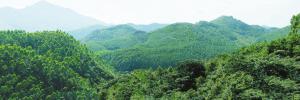 乡镇XX年林业工作总结