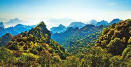 创建林业生态县工作方案