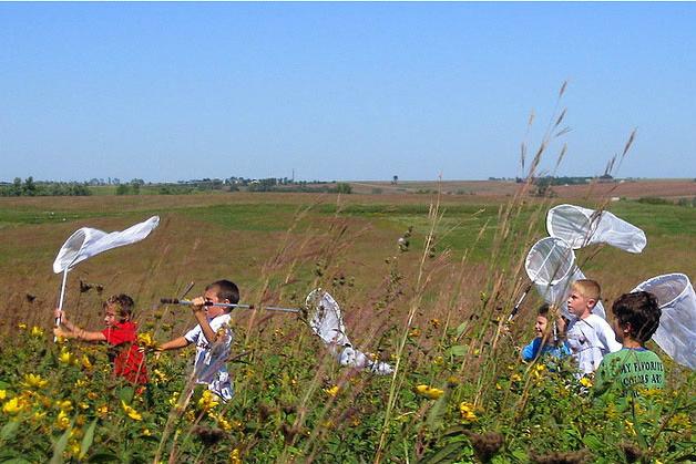 Butterfly Hunt