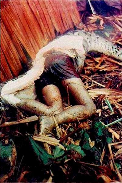 python-digest