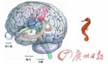 神经记忆力
