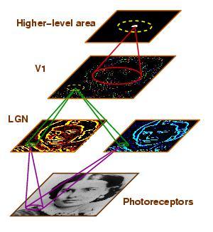 Topographica