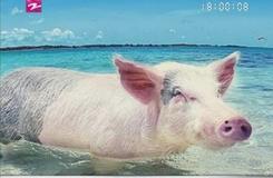 小猪的惬意生活...