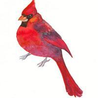 红鸟CMS