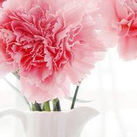 培养美丽花朵...