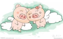 爱情猪大战