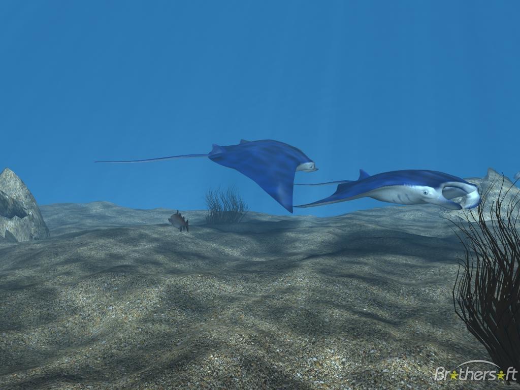 free 3D Manta Ray Aqua