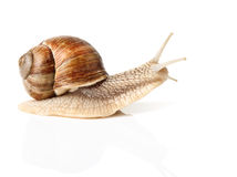 蜗牛比速度