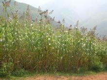 加快畜牧业发展促进农民增行动实施方案