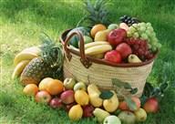 水果小孩摄影PSD素材2