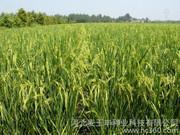 农作物种子采购合同范文