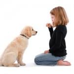 训练宠物狗狗...
