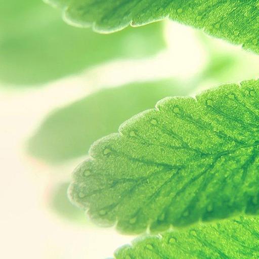 綠色高清風景精品壁紙
