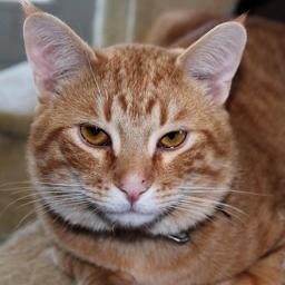 TalkActive Cat
