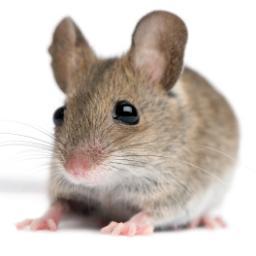 MiceEye 0.9.0.1