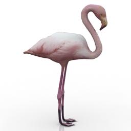 3D Flamingos