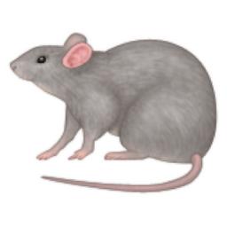 Rats 1.00