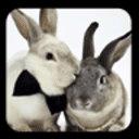 兔子拼图 1.0