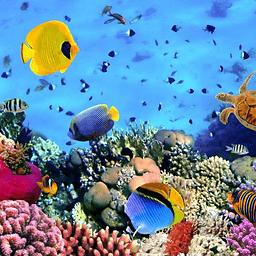 海底总动员拼图...