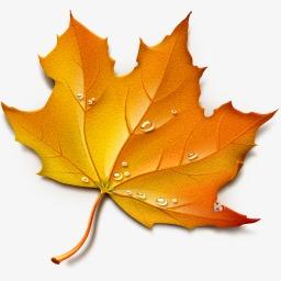 秋季枫叶设计矢量素材