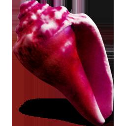 蝴蝶贝壳花朵图标