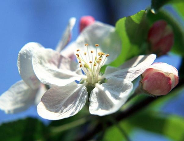 Spring Flourish Free Screensaver截图1