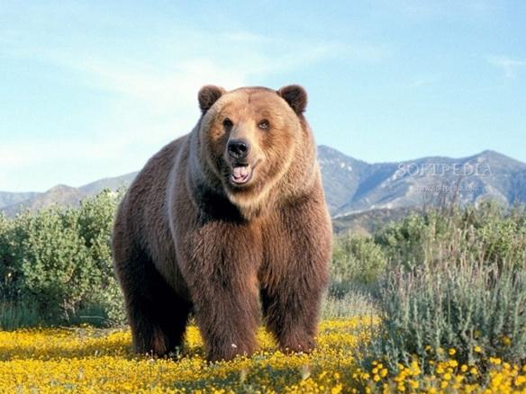 Mighty Bears Free Screensaver截图1