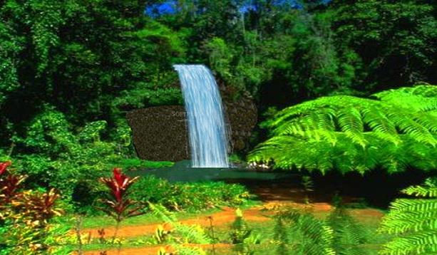 Millaa Millaa Waterfall截图1