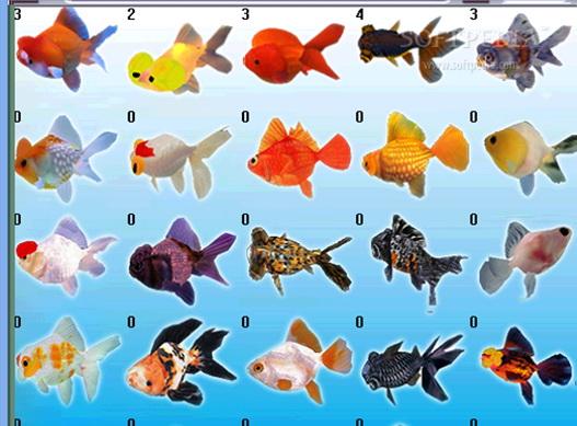 Digital Goldfish Screensaver