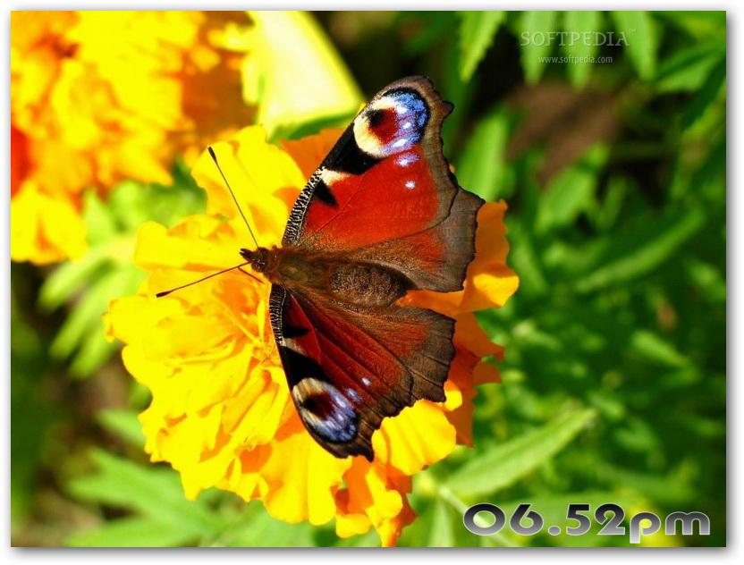 Graceful Butterflies Free Screensaver截图1