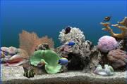 热带鱼水族箱屏幕保护程序段首LOGO