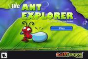 蚂蚁窝的秘密